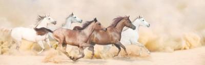 Konie pustynia natura zwierzęta