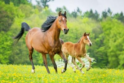 Konie łąka drzewa kwiaty natura zwierzęta