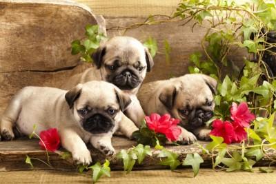 Trzy małe pieski kwiaty natura zwierzęta