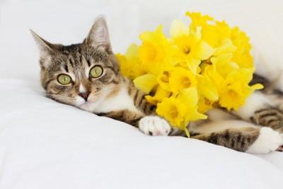 Kot kwiaty natura zwierzęta