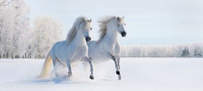Dwa konie zima drzewa las natura zwierzęta