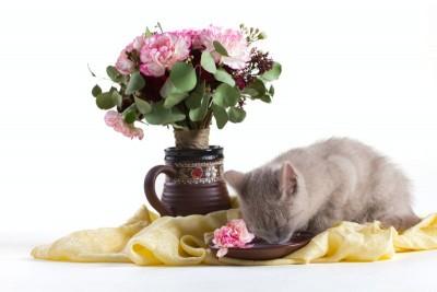 Mały kotek kwiaty natura zwierzęta