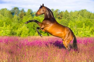 Koń łąka pola kwiaty drzewa natura zwierzęta