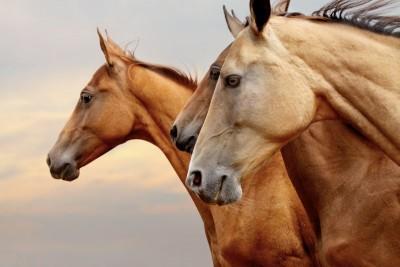 Trzy konie natura zwierzęta