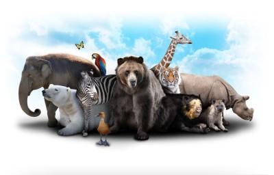 Zwierzęta różne natura