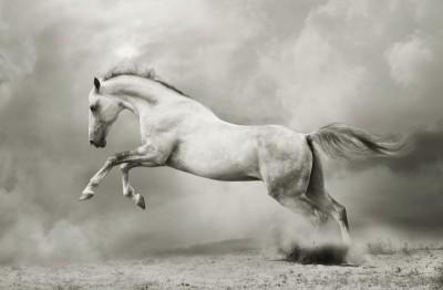 Koń natura zwierzęta szarości