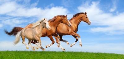 Trzy konie łąka natura zwierzęta