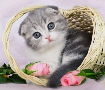 Mały kotek w koszyku kwiaty natura zwierzęta