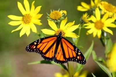 Motyl kwiaty natura zwierzęta