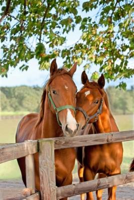 Dwa konie drzewa natura zwierzęta