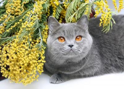 Szary kot kwiaty natura zwierzęta
