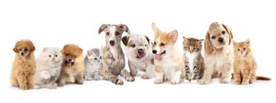 Psy pieski koty kotki zwierzęta