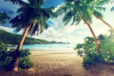 Morze plaża palmy góry krajobraz widoki natura
