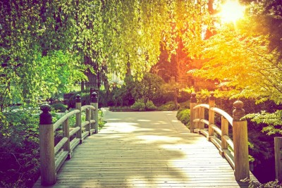 Most park drzewa alejki natura widoki