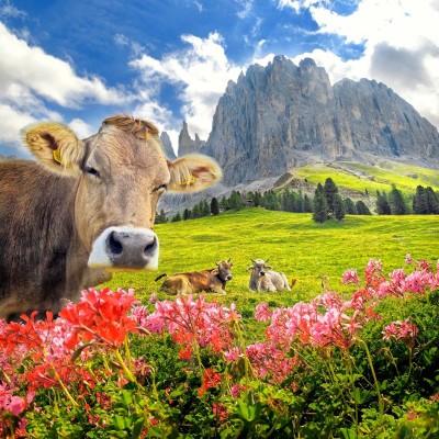 Polana z górami, kwiatami i krowami