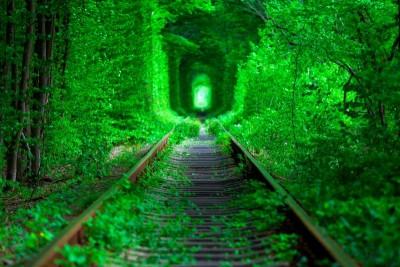 Tory - zielony tunel z drzew