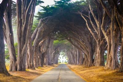 Chodnik z tunelem z drzew