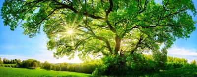 Zielona polana z dużym drzewem i słońcem