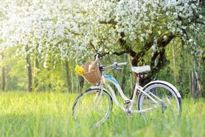 Łąka z kwitnącą jabłonią i białym rowerem