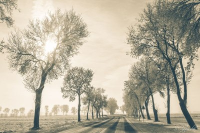 Droga zimą z drzewami i polami ze śniegiem
