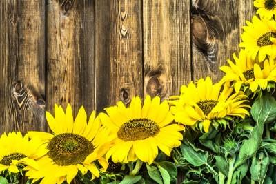 Kwiaty słonecznika na tle drewna