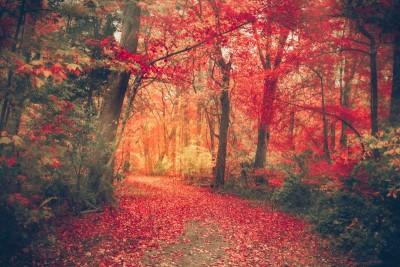 Ścieżka w lesie jesienią