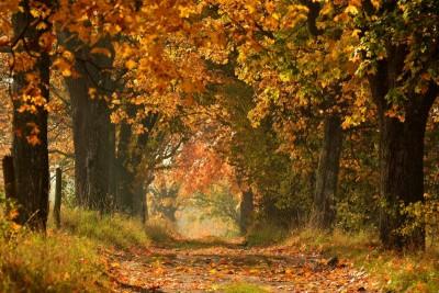 Ścieżka leśna w słoneczny dzień jesienią