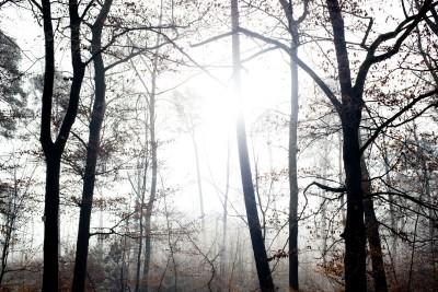 Zamglony las, drzewa bez liści słońce