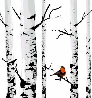 Brzozy na białym tle z ptakiem