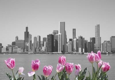 Kwiaty tulipany budowle miasto budynki szarości