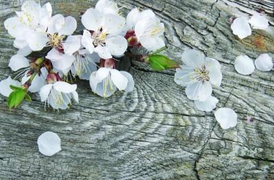 Kwiat drzewka