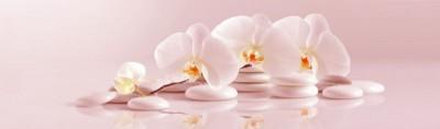 Różowe tło - orchidea