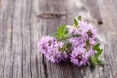 Fioletowy kwiat bzu