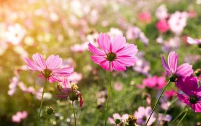 Różowy kwiat na łące