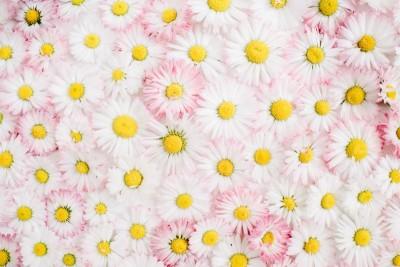 Pudrowe kwiatki