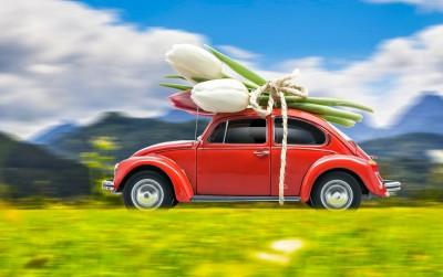 czerwony samochód, tulipany