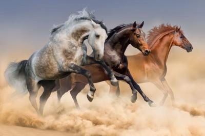 biegnące konie  01