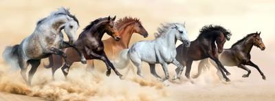 biegnące konie  02