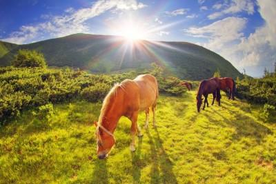 konie, góry, polana