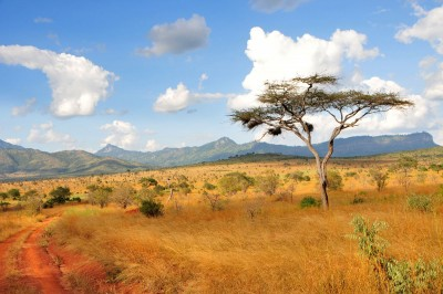 Afrykańska sawanna