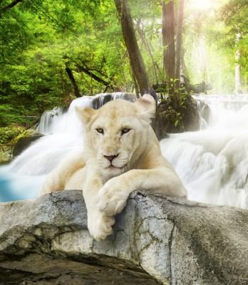 Biała lwica na kamieniu zwierzęta afrykańskie