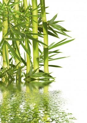 bambus, woda
