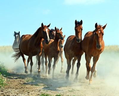 konie , galop