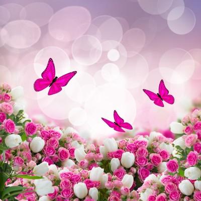motyle, kwiaty