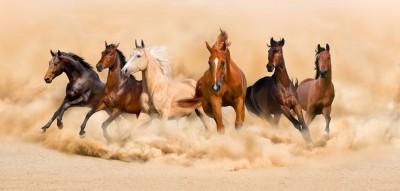 konie, piasek, pustynia