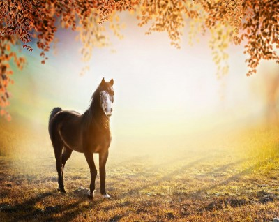 koń, jesień