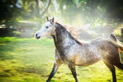 koń , łąka