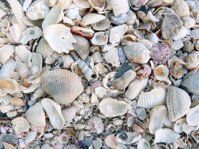 muszelki, morze, plaża
