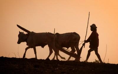 rolnik, zachód słońca