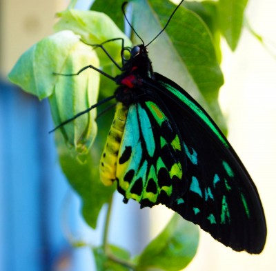 kolorowy motyl, liście